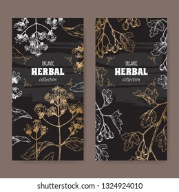 Two labels with Cinchona officinalis aka quinine or Jesuit bark and Crataegus monogyna aka common hawthorn sketch on black. Green apothecary series. Great for traditional medicine, or gardening.