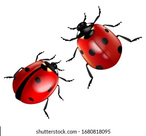 Two ladybugs isolated on a white background.  Highly realistic illustration.