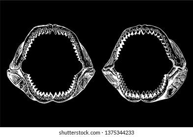 Megalodon Shark Images, Stock Photos & Vectors | Shutterstock