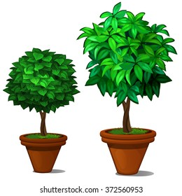 Two miniature tree in the bonsai style for modern interior. Vector.