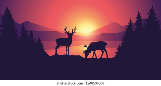 two moose in wildlife at beautiful lake in the mountains at sunrise vector illustration EPS10