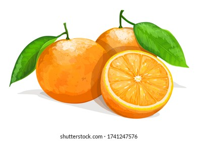 Two oranges with slice isolated on white background. Vector illustration.