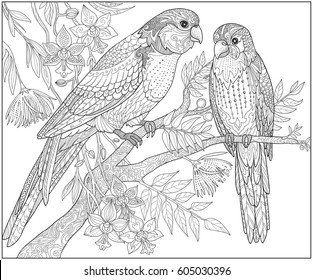 Two parrots sit on a branch in the jungle, adult coloring book page. Doodle tropical birds vector illustration.