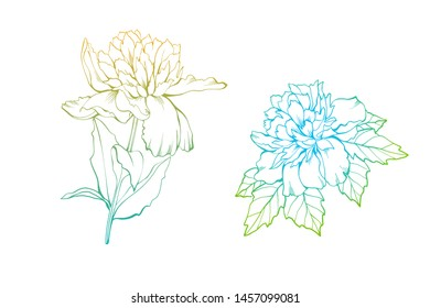 Two peony flowers as design elements. Hand drawn sketch style. Isolated on white. Vector illustration. Vintage background for paper, textile, wallpaper, cards and wrapping