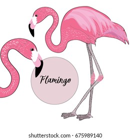 Two pink flamingos. Vector illustration on white background. Flamingo name in the pink circle