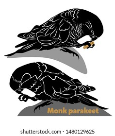 Two Quaker Parrots (Monk Parakeet) isolated on white background. Stencil for laser cutting. Template. Wild parrots eating. Simple illustration. Logo,  sign, emblem, symbol. Stamp. Abstract. - Vector