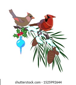Two red cardinals on pine tree branch with pine cones and snow Christmas tree decoration birds couple vector isolated winter illustration