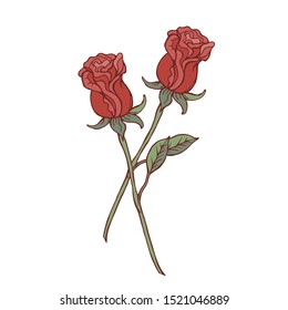 Two red roses isolated on white background. Vector illustration.