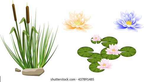 Two reeds in grass and set of water lilly isolated on white background