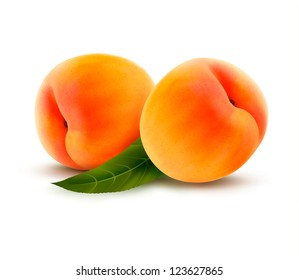 Two ripe peach fruit with leaves. Vector illustration.