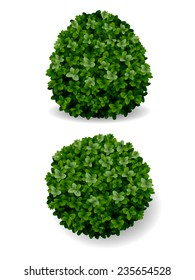 two round bush decorative plant boxwood eps8