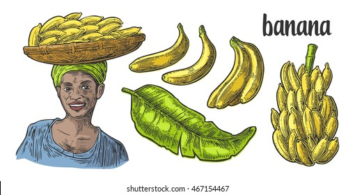 Two single and bunches of fresh banana with leaf. African woman carries a basket with fruits on her head. Vector color vintage engraving illustration isolated on white background. For label and menu