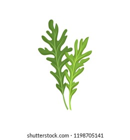 Two small green rocket leaves. Fresh arugula. Natural ingredient. Culinary herb. Flat vector design