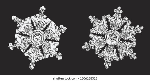 Two snowflakes isolated on black background. Vector illustration based on macro photos of real snow crystals: elegant star plates with hexagonal symmetry, short simple arms and glossy, relief surface.