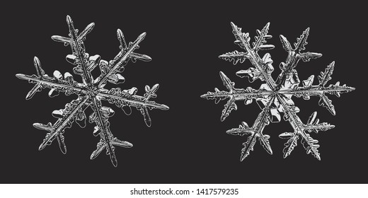 Two snowflakes isolated on black background. Vector illustration based on macro photos of real snow crystals: stellar dendrites with fine hexagonal symmetry, glossy relief surface and ornate shapes.