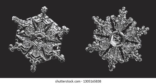 Two snowflakes on black background. Vector illustration based on macro photos of real snow crystals: elegant star plates with fine hexagonal symmetry, short simple arms and glossy, relief surface.