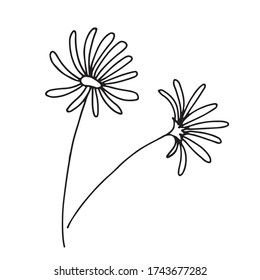 Two stylized daisies.  One flower is painted in front.  Another flower is painted on its side.  Doodle style.  Vector.