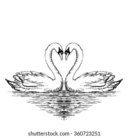Two swans sketch. Hand drawn vector illustration.