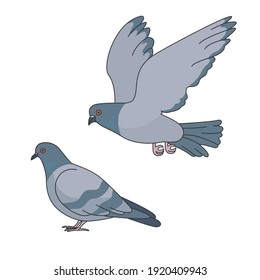 Two vector pigeons isolated on white background.