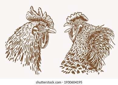 Two vintage portraits of rooster,farmbird,sepia illustration