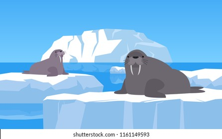 two walruses on ice floe arctic landscape