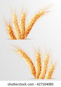Two Wheat ears isolated on a transparent background. EPS 10 vector file included