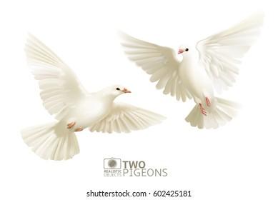Два белых голуби изолированы