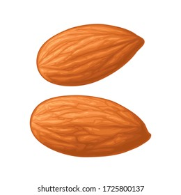 Two whole almonds nuts without shell. Vector color realistic illustration. Isolated on white background.