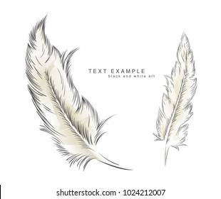 two writing old feather paint with text