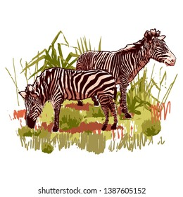 Two zebras standing in the steppe landscape. Vector graphics drawn in the technique of rough brush in calm colors