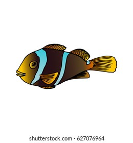 Twoband anemonefish vector draw