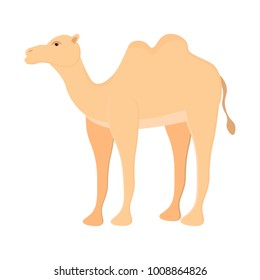 A two-humped camel. Bactrian. Cute camel with shadow. Domesticated animal from Central Asia. Beast of burden. Artiodactyla. Ship of the desert. Flat vector illustration isolated on white background.