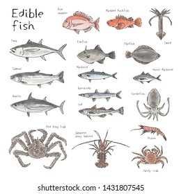 Type of edible fishes, seafood, hand drawn sketch watercolor illustration (tuna, bonito, salmon, red snapper, mackerel, jack mackerel, cod, cod fish, crab, shrimp)