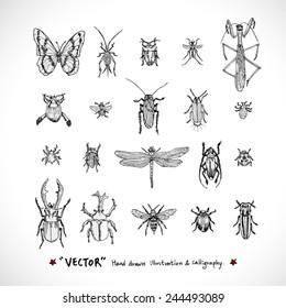 Types of animal / Hand drawn illustrations - vector