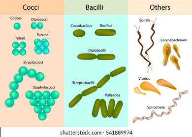 Bacteria Cell Images, Stock Photos & Vectors | Shutterstock
