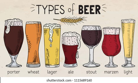types of beer. Beautiful illustration of porter, wheat, stout, ale, light, lager beer