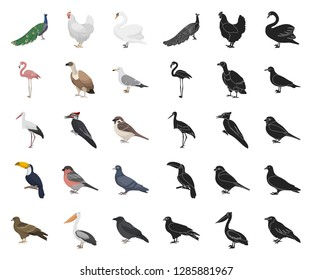 Types of birds cartoon,black icons in set collection for design. Home and wild bird vector symbol stock web illustration.