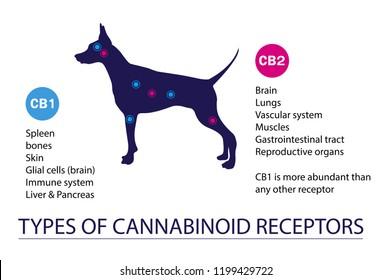 types of cannabinoid receptors