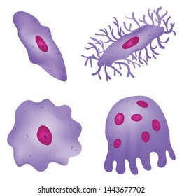 Types of Cells in Bone