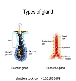 types of gland  anatomy of an endocrine and exocrine glands  different of  glands secretion