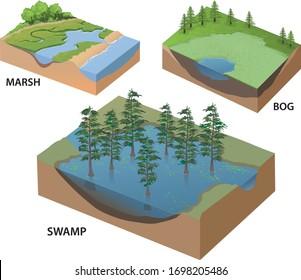 types of wetlands infographic in isometric - vector