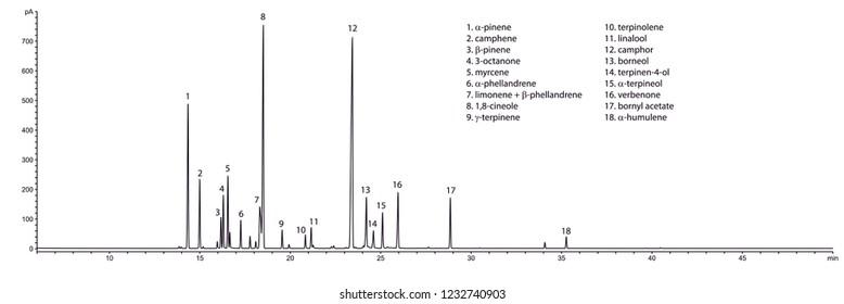 Typical GC chromatogram of rosemary's (Rosmarinus officinalis) essential oil.