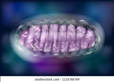 Typical Mitochondria in colour background. Vector illustration