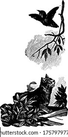 A typical representation of a cat chasing a bird, and in turn the bird flew into the sky, flapping its wings, vintage line drawing or engraving illustration.