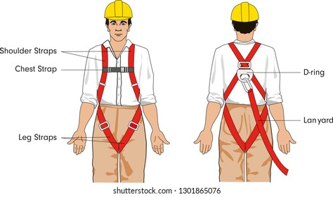 Typical safety harness