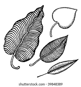 typographic leafs linear drawings