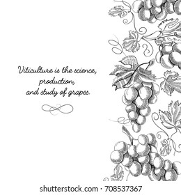 Typography design original card doodle with inscription that viticulture is science, production and study of grapes vector illustration