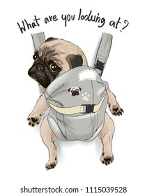 typography slogan with funny pug in back carrier illustration