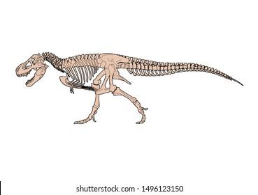 Tyrannosaurus Rex (T-Rex) Skeleton, color vector illustration