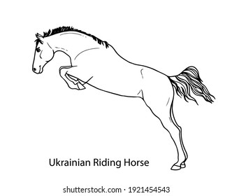 Ukrainian riding horse bride. Horse pattern design. Line art style horse breed for children colored book creation.